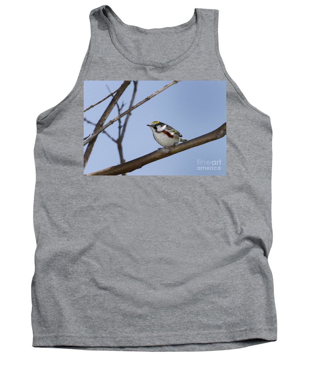Chestnut Tank Top featuring the photograph Chestnut Warbler by Ronald Lutz