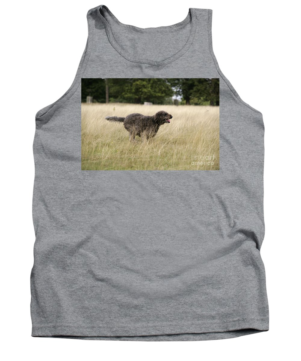 Labradoodle Tank Top featuring the photograph Chocolate Labradoodle Running In Field by John Daniels