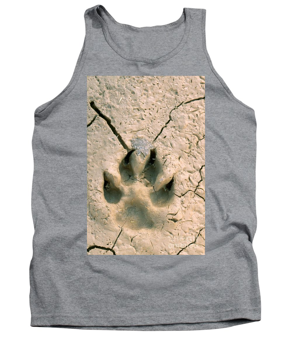 Coyote Print Tank Top featuring the photograph Coyote Print by Rod Planck