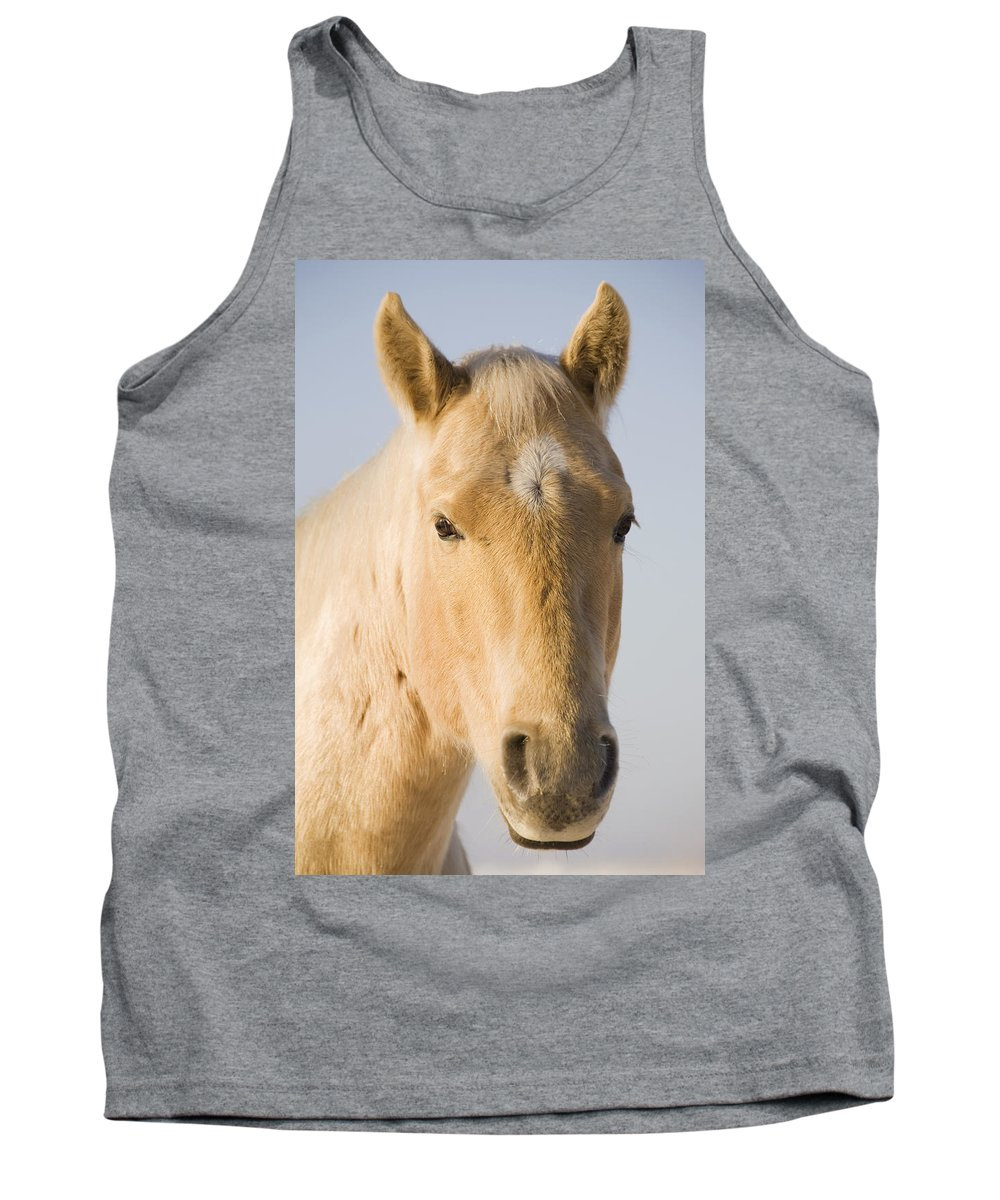 Animal Tank Top featuring the photograph Cream Coloured Horse Head Looking by Michael Interisano