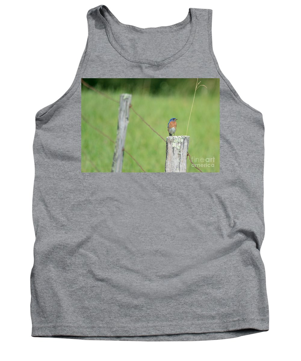 Country Tank Top featuring the photograph Eastern Bluebird by Cheryl Baxter
