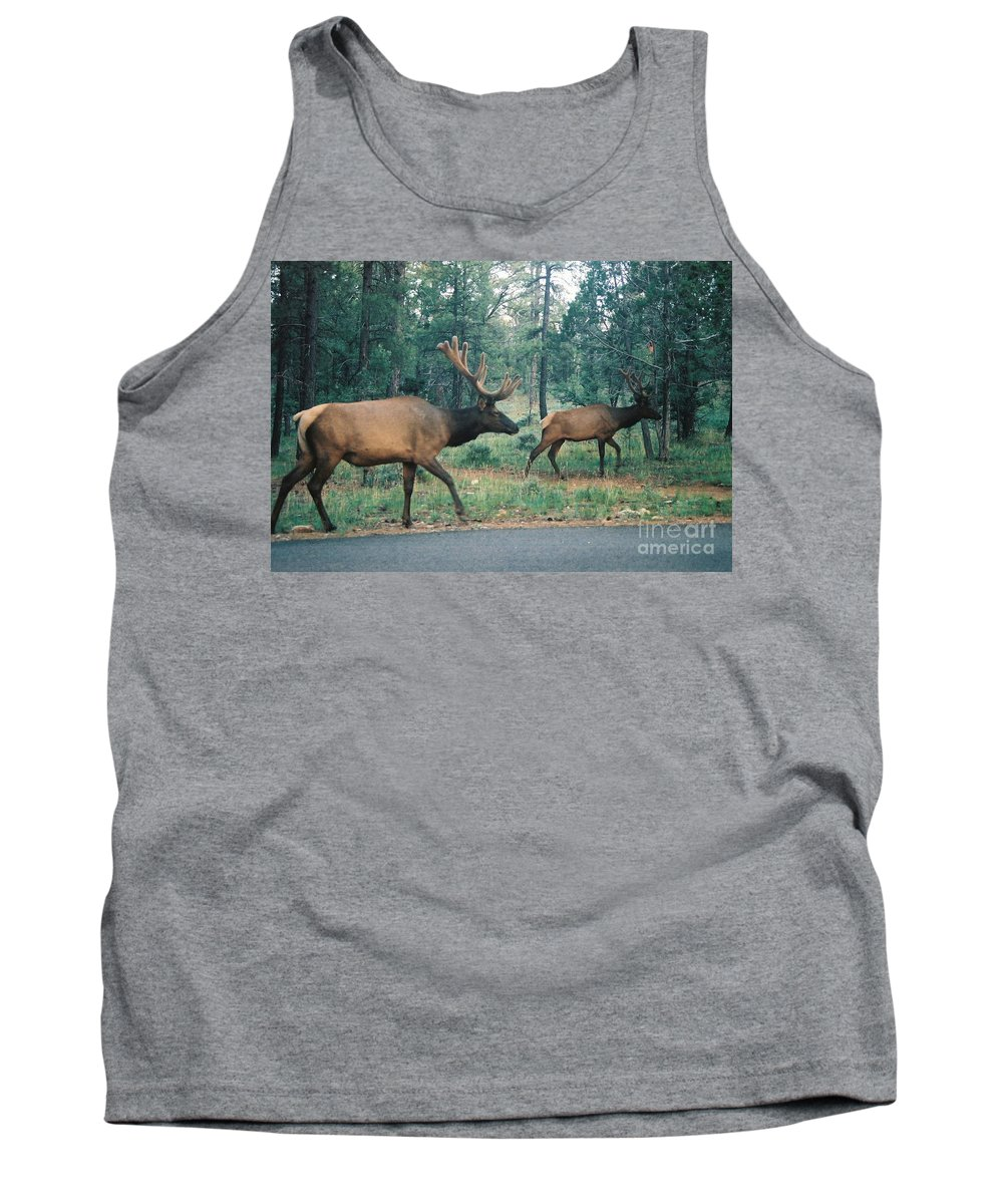 Elk Tank Top featuring the photograph Elk by Eric Schiabor