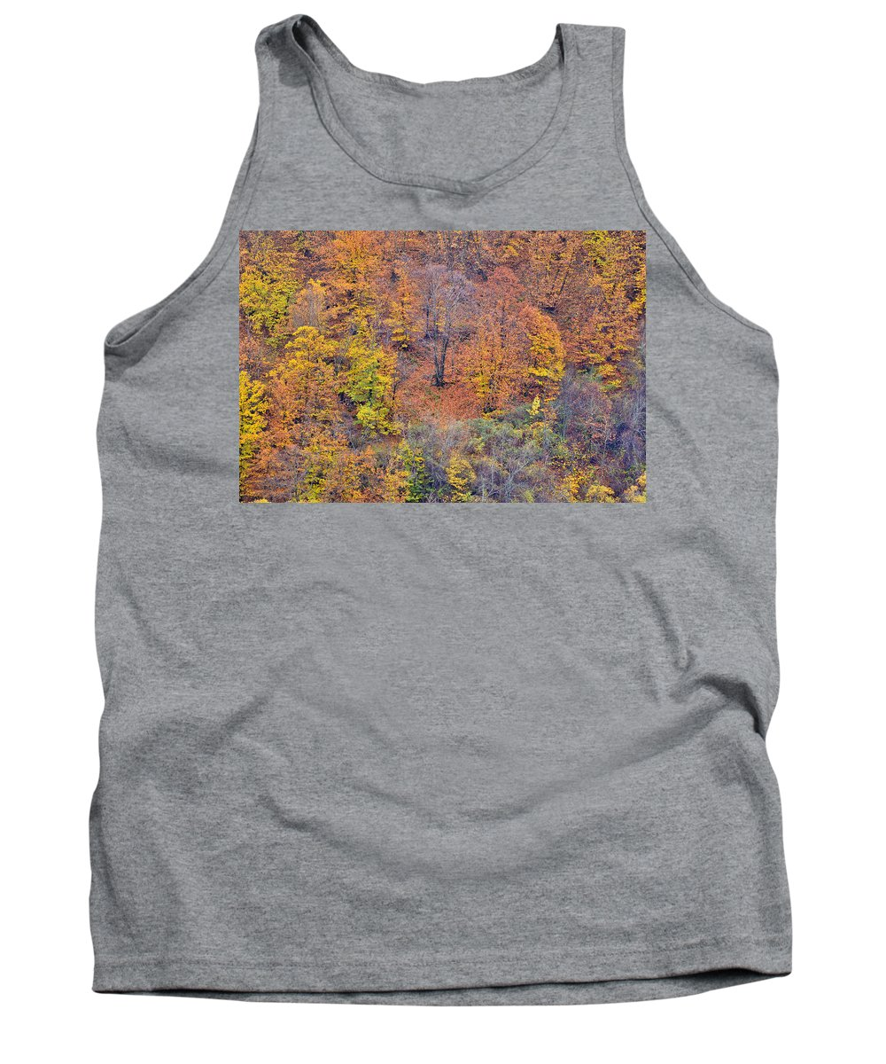 Trees Tank Top featuring the photograph Fall Colors by Guido Montanes Castillo