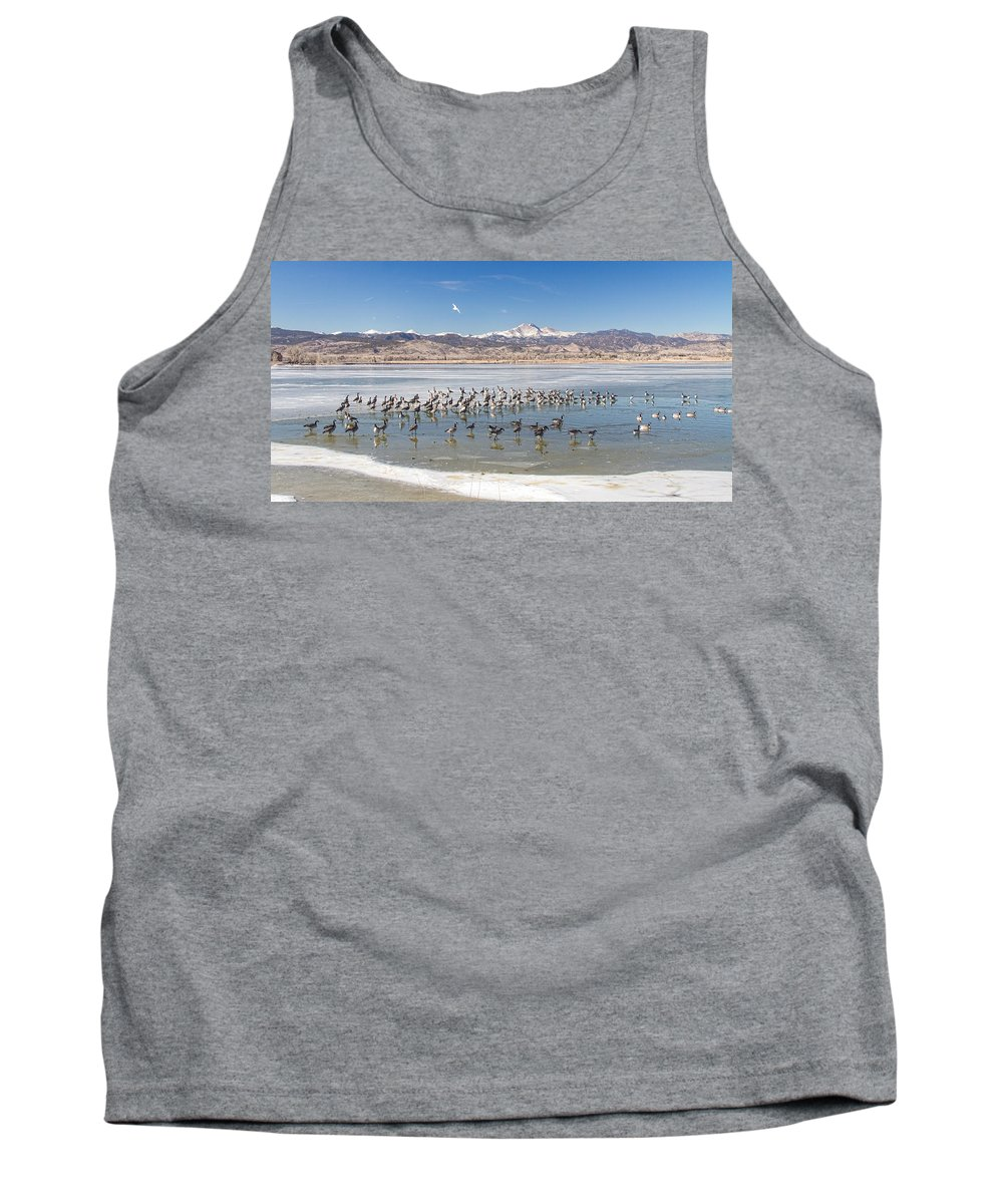 Longs Peak Tank Top featuring the photograph Geese On Ice by James BO Insogna