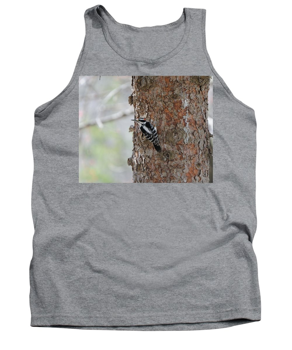 Bird Tank Top featuring the photograph Hairy Woodpecker by Scott Angus