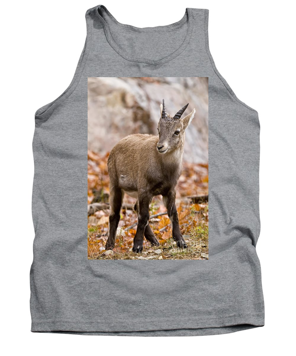Ibex Tank Top featuring the photograph Ibex Pictures 10 by World Wildlife Photography