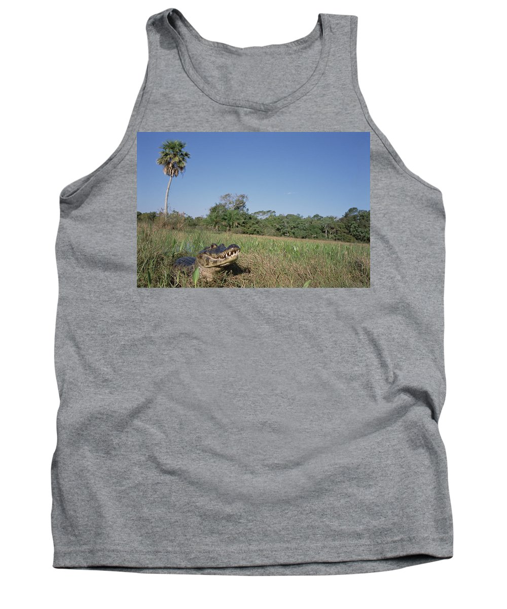 Feb0514 Tank Top featuring the photograph Jacare Caiman In Marshland Pantanal by Tui De Roy