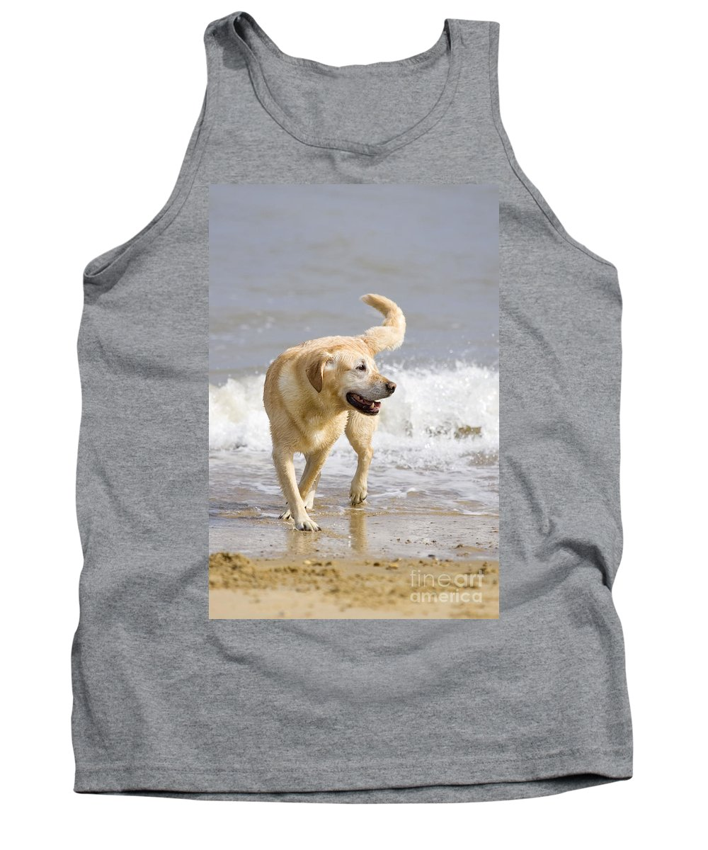 Labrador Tank Top featuring the photograph Labrador Dog Playing On Beach by Geoff du Feu