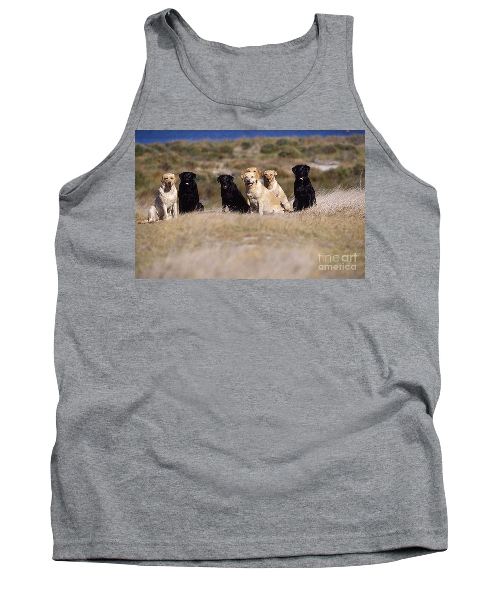 Labrador Retriever Tank Top featuring the photograph Labrador Dogs Waiting For Orders by Chris Harvey