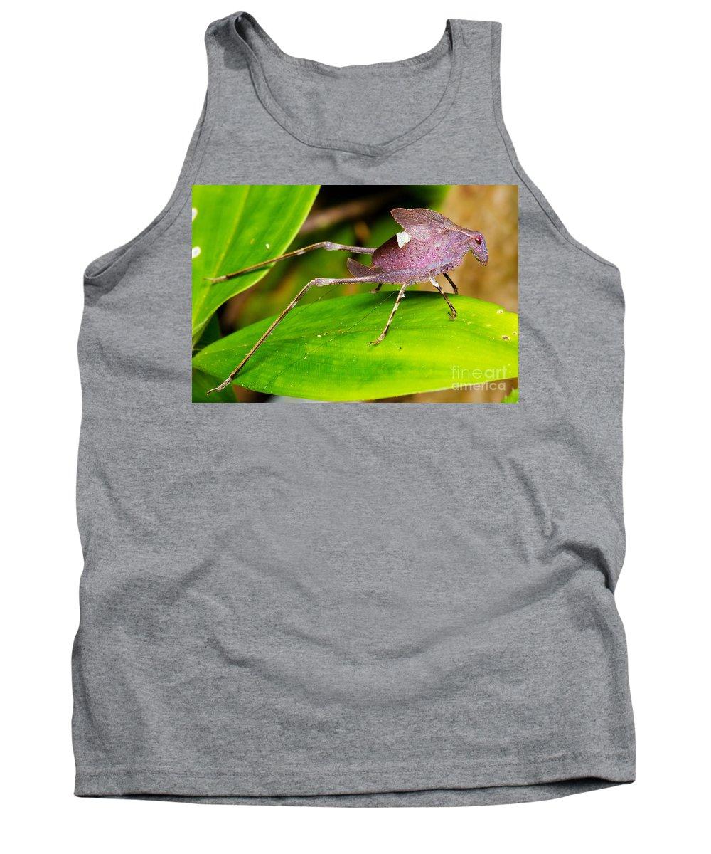 Leaf Katydid Tank Top featuring the photograph Leaf Katydid by BG Thomson
