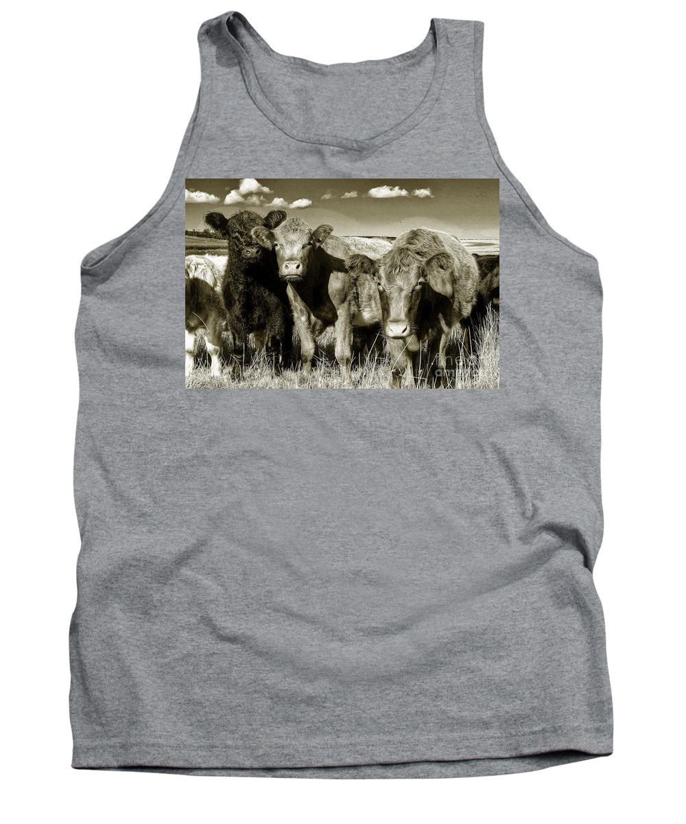 Cows Tank Top featuring the photograph Mooos by Rob Hawkins