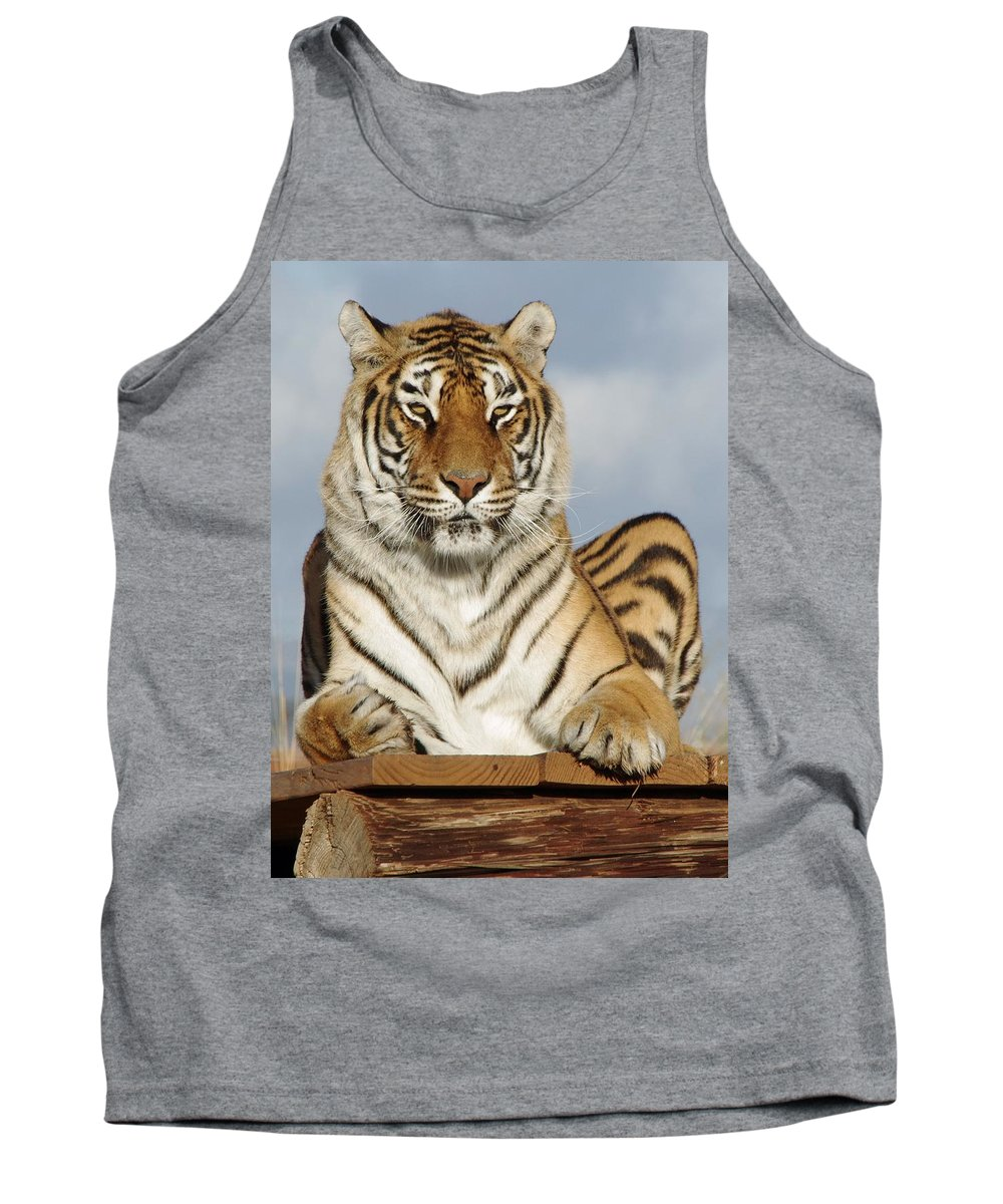 Out Of Africa Tank Top featuring the photograph Out Of Africa Tiger 4 by Phyllis Spoor