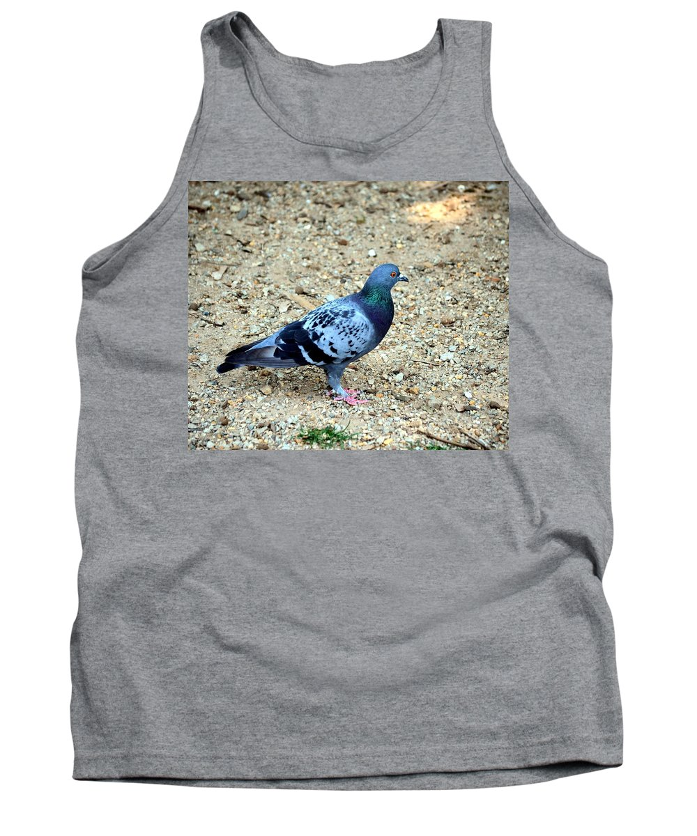 Pigeon Tank Top featuring the photograph Pigeon Toed by Maria Urso