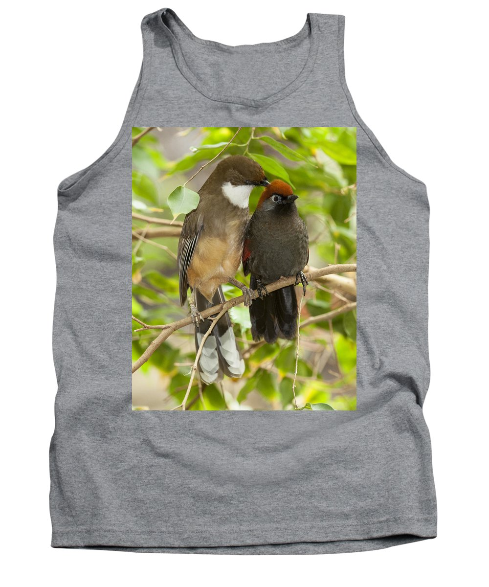 Birds Tank Top featuring the photograph Preening by Richard Kitchen