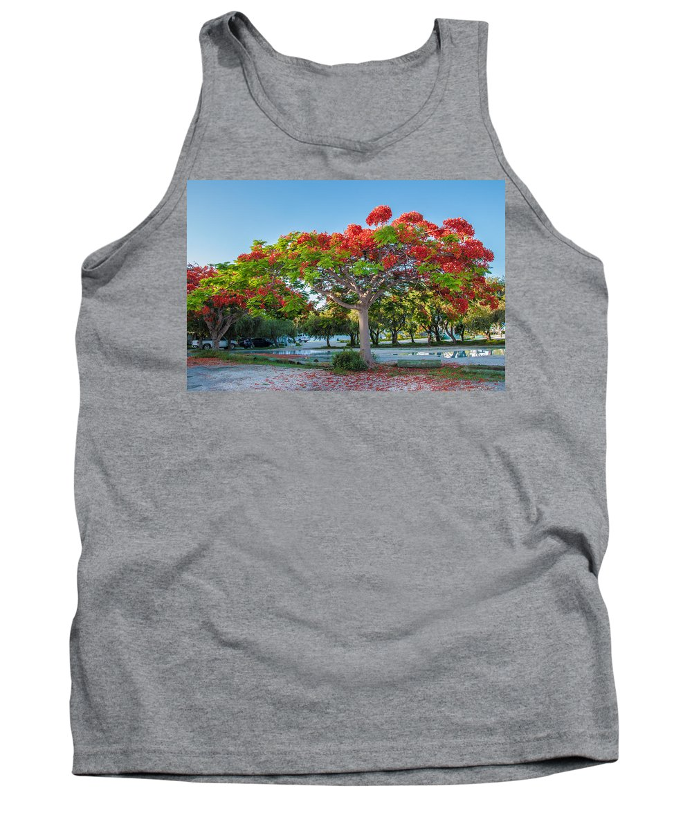 Royal Poinciana Tank Top featuring the photograph Royal Poinciana by Amel Dizdarevic