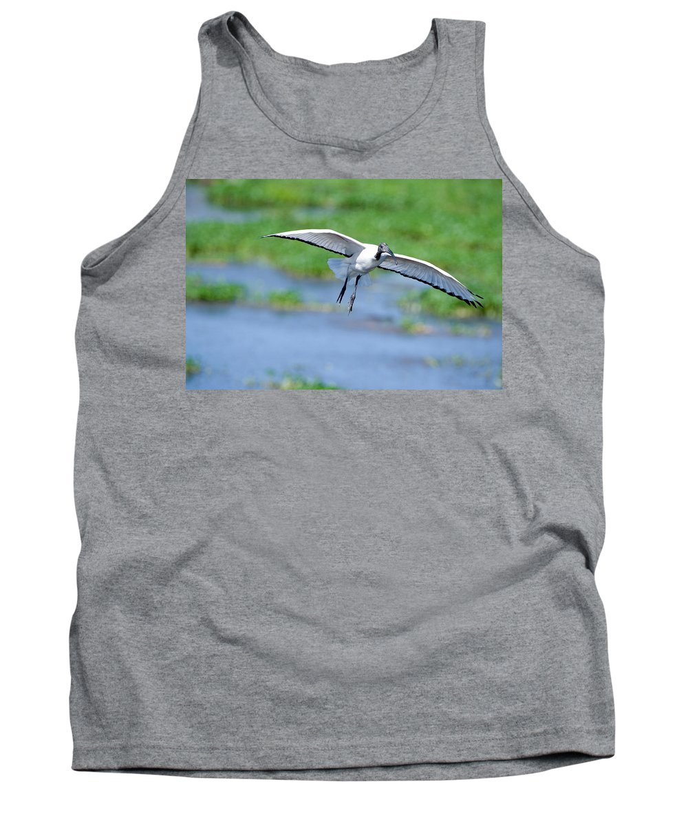 Photography Tank Top featuring the photograph Sacred Ibis Threskiornis Aethiopicus by Panoramic Images