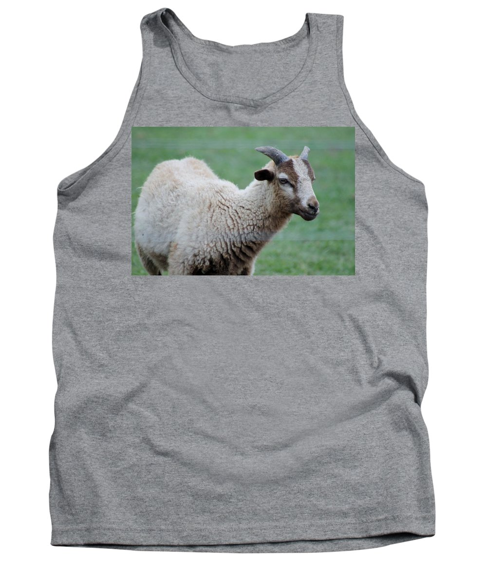 Angelic Tank Top featuring the photograph Sheep by Mary Koval