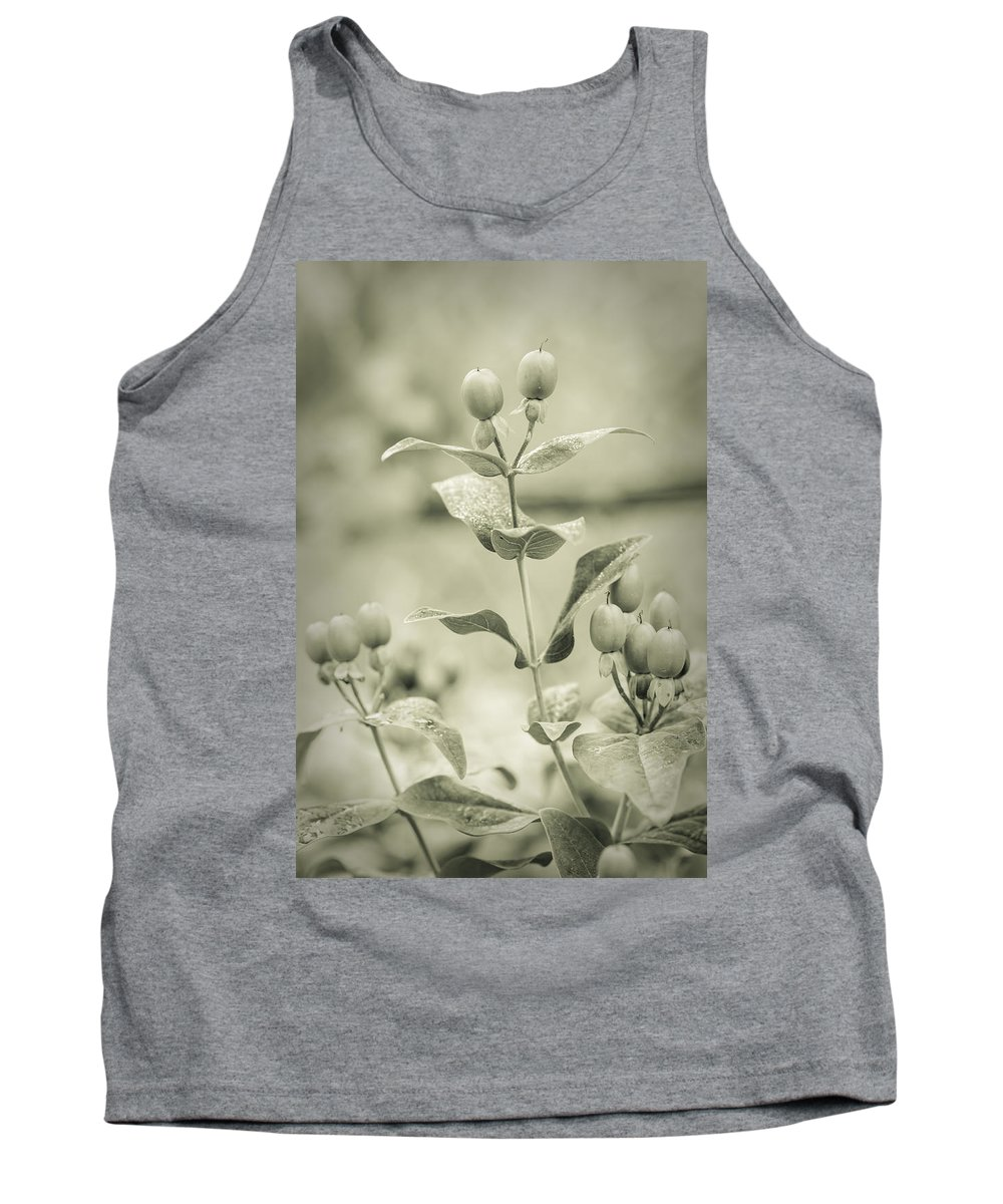 Dream Tank Top featuring the photograph St. John's Wort - Dreamers Garden Series by Marco Oliveira