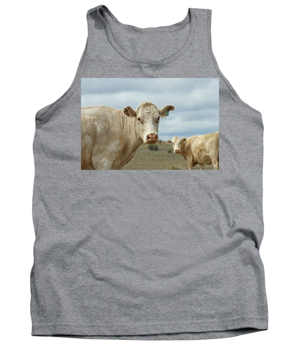 Cow Tank Top featuring the photograph The Cows by Ernie Echols