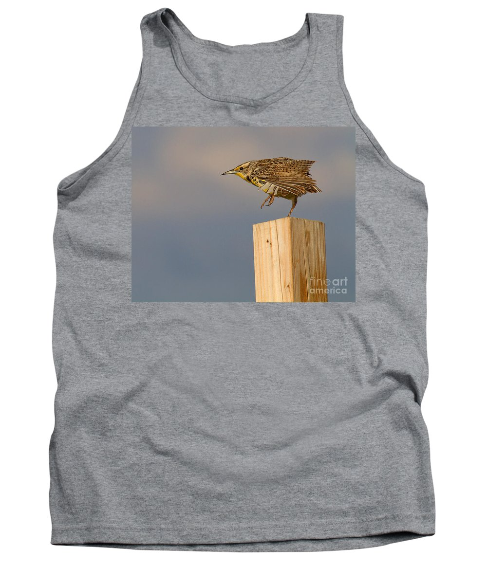 Meadowlark Tank Top featuring the photograph The Crane Kick by Jim Garrison