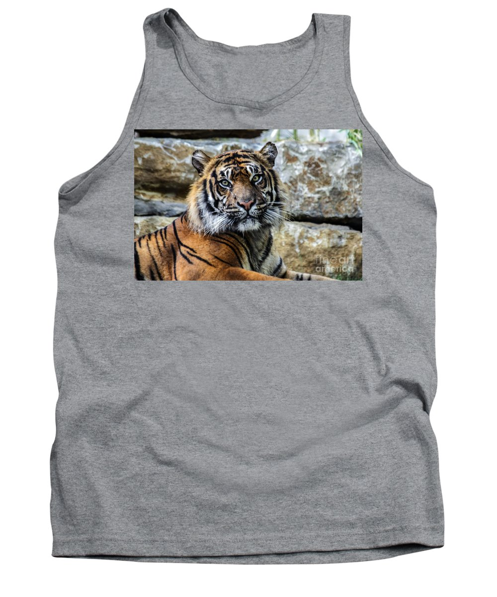Kc Zoo Tank Top featuring the photograph Tiger Facing The Crowd by Terri Morris