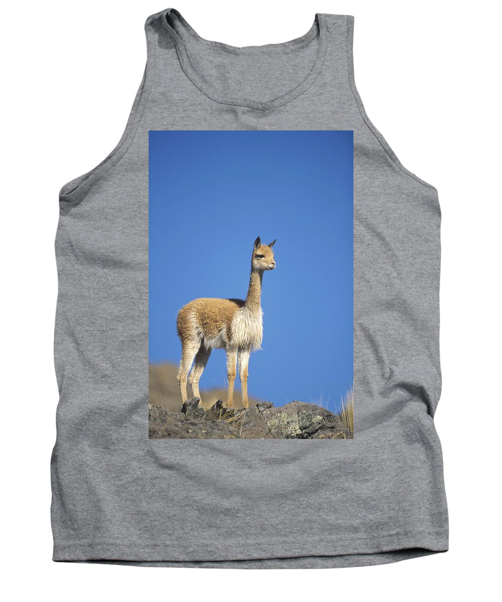 Feb0514 Tank Top featuring the photograph Vicuna Portrait Pampa Galeras Nature by Tui De Roy