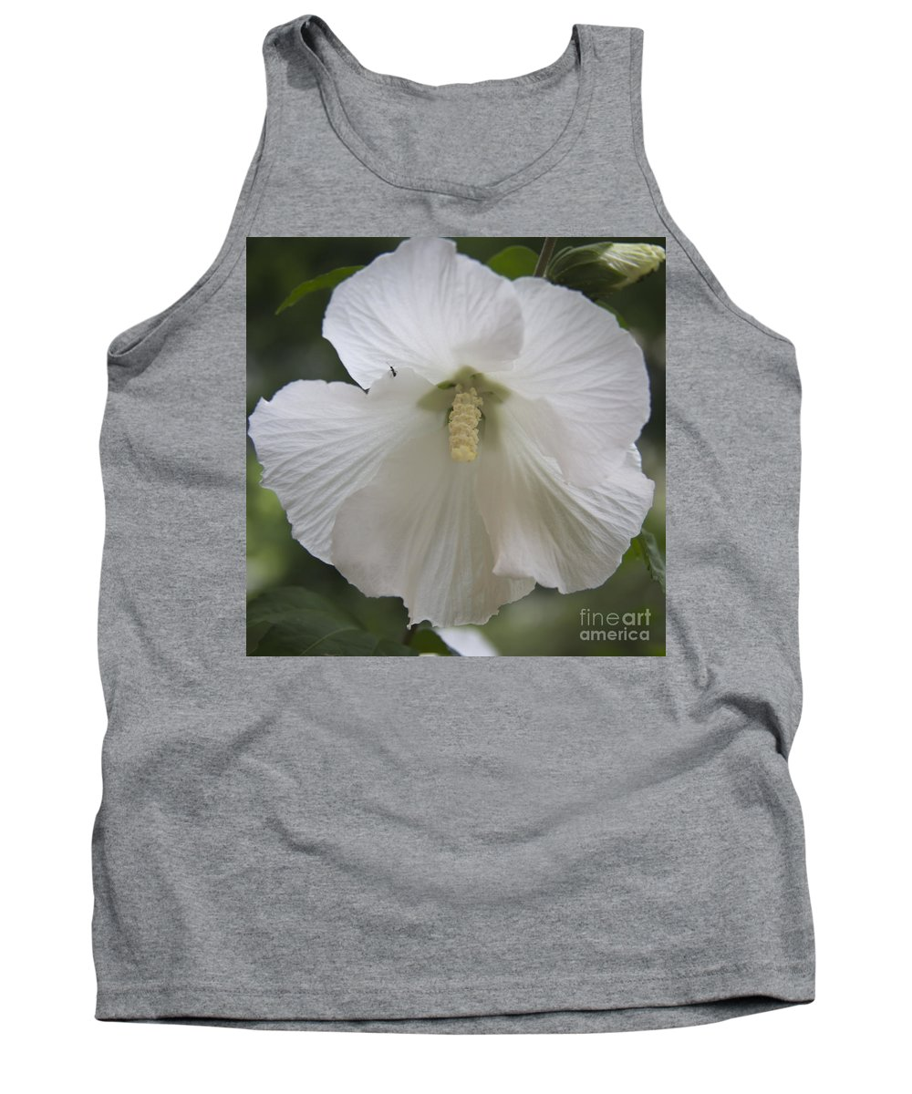 Rose Of Sharon Tank Top featuring the photograph White Hibiscus Squared by Teresa Mucha