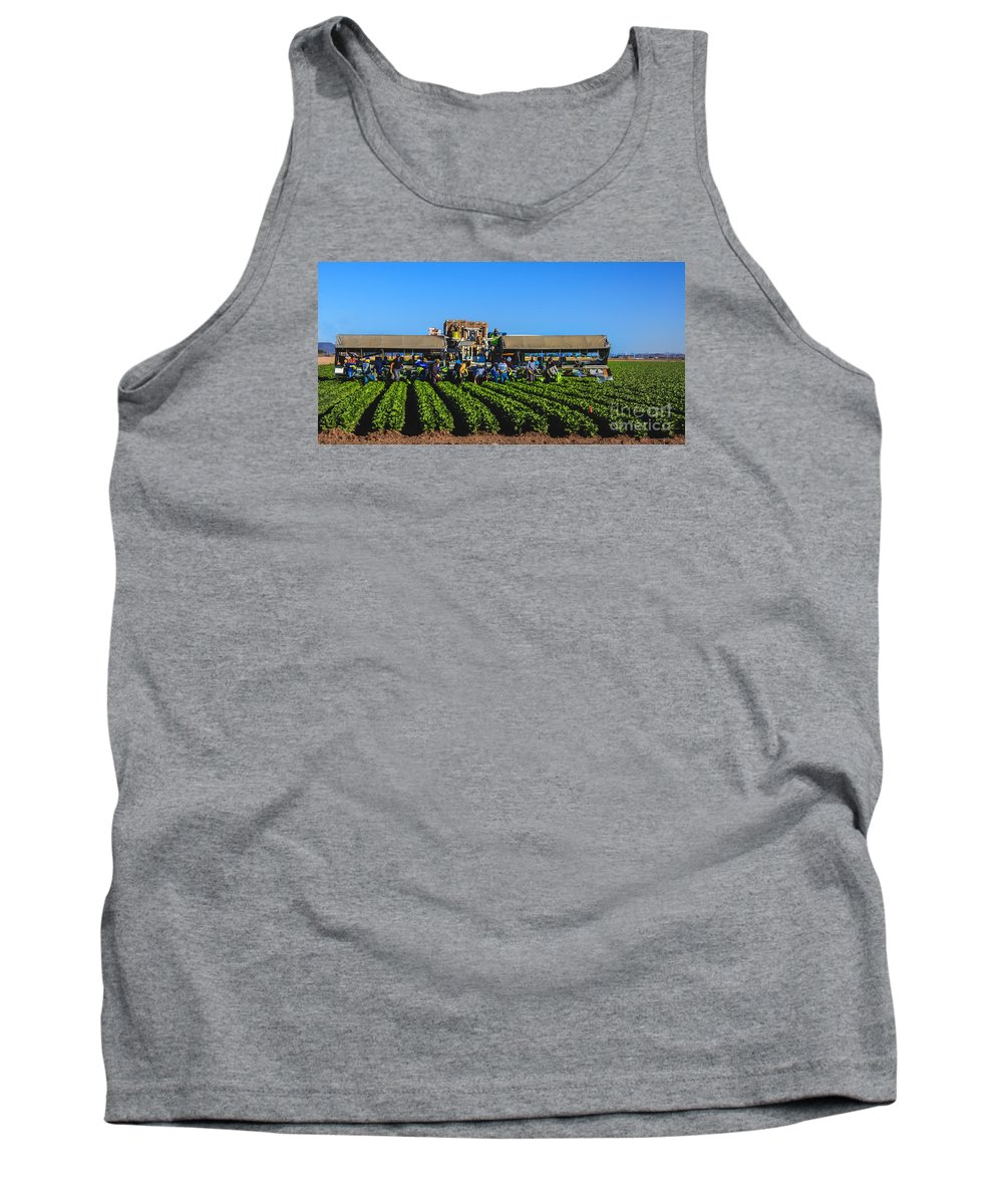 Winter Lettuce Tank Top featuring the photograph Winter Lettuce Harvest by Robert Bales