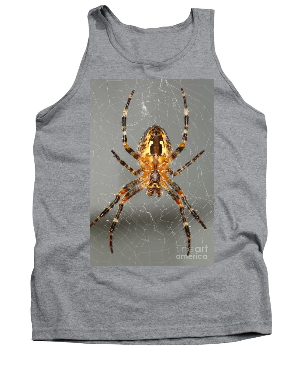 Animal Tank Top featuring the photograph Marbled Orb Weaver Spider by Ted Kinsman