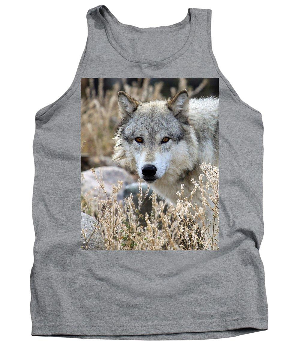 Wolf Tank Top featuring the photograph Blending Wolf by Steve McKinzie