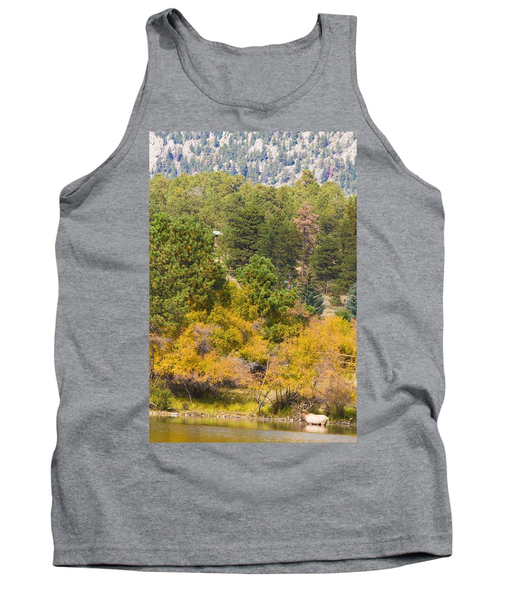 'estes Park' Tank Top featuring the photograph Bull Elk Lake Crusing With Autumn Colors by James BO Insogna