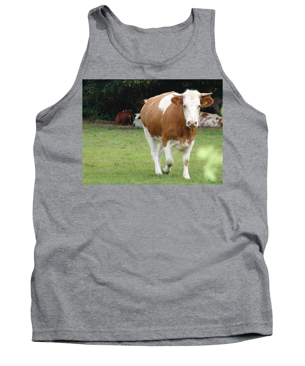 Cow Tank Top featuring the photograph Cow by Ashok Patel