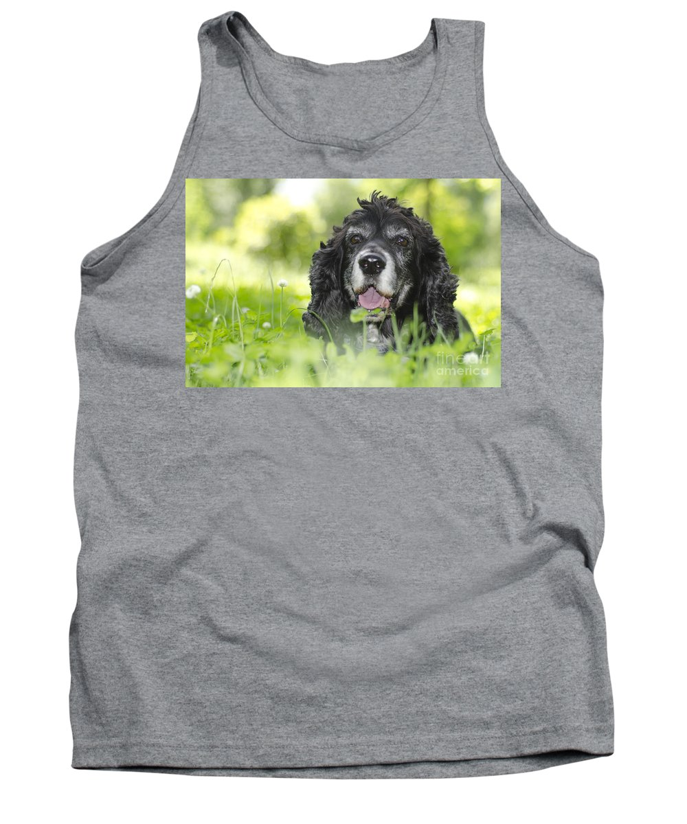 Dog Tank Top featuring the photograph Dog On The Green Grass by Mats Silvan