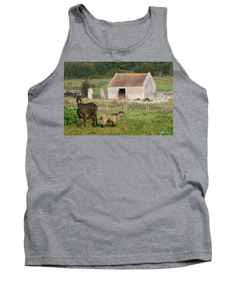 Goats Tank Top featuring the photograph Goats by Diana Haronis