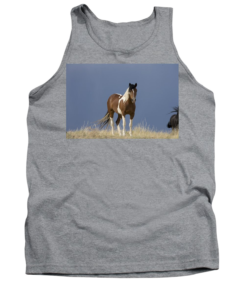 Tank Top featuring the photograph Paint Filly Before by Rich Franco