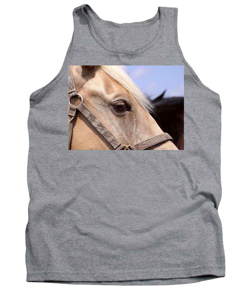 Horse Tank Top featuring the photograph Palomino At Benson by Travis Truelove
