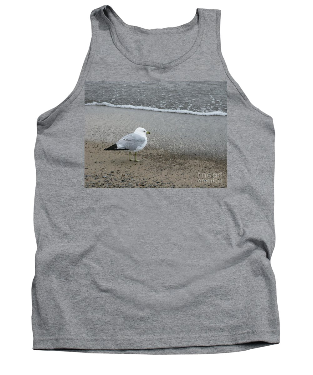 Ring-billed Gull Tank Top featuring the photograph Ring-billed Gull by Ann Horn