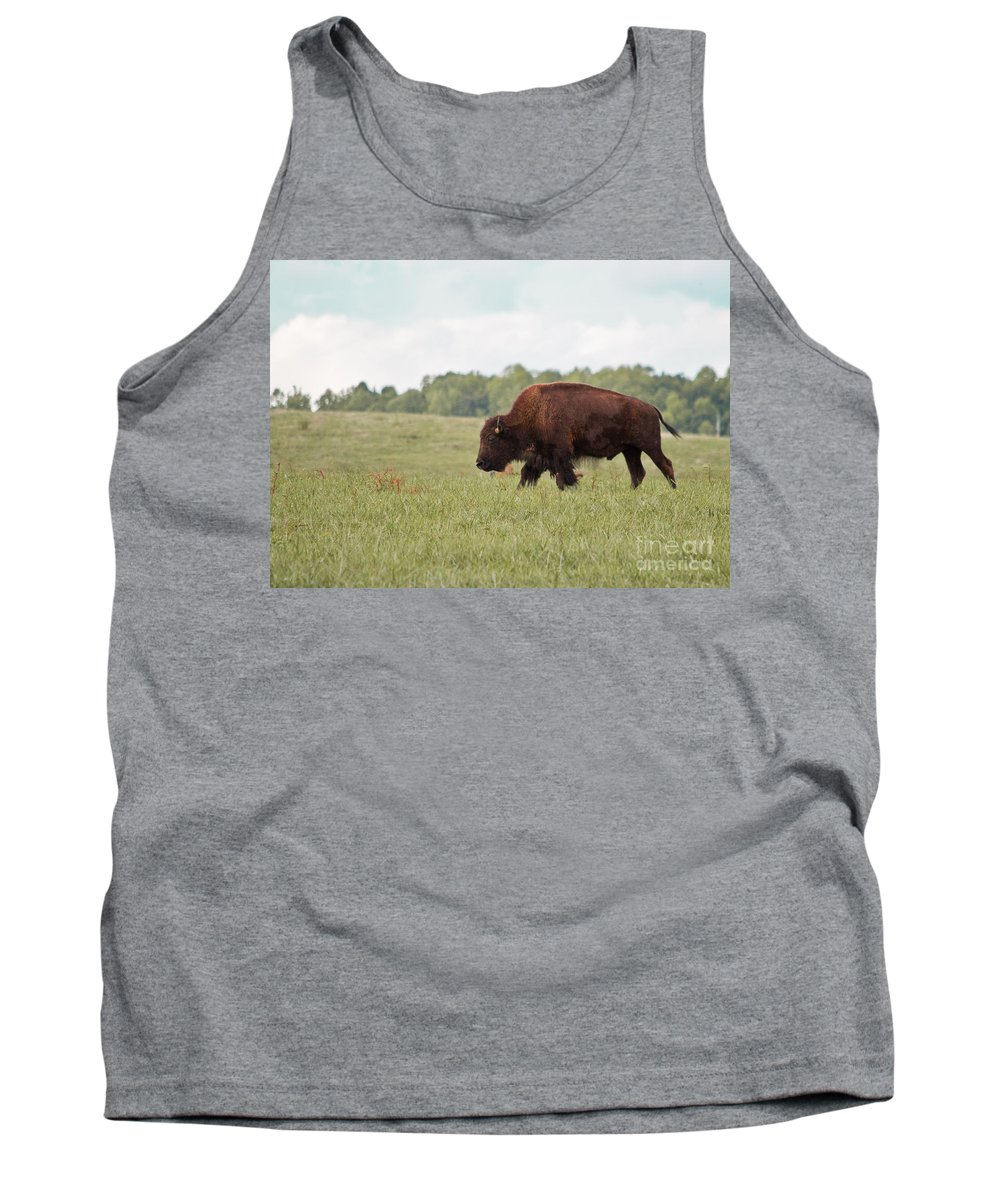 Buffalo Tank Top featuring the photograph Roaming The Plains by Scott Hervieux