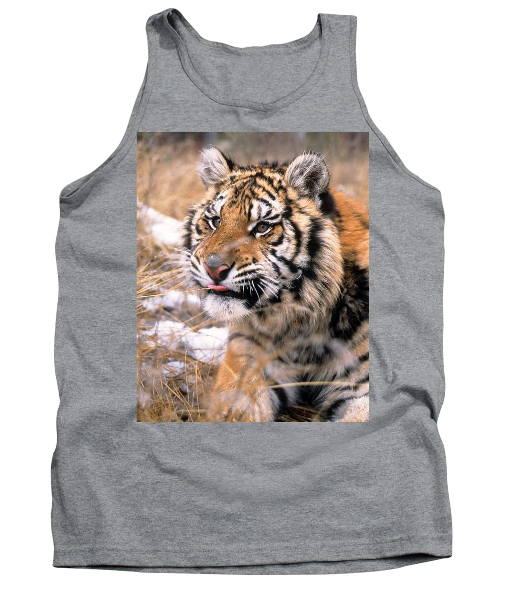 Siberian Tiger Tank Top featuring the photograph Siberian Tiger by Larry Allan