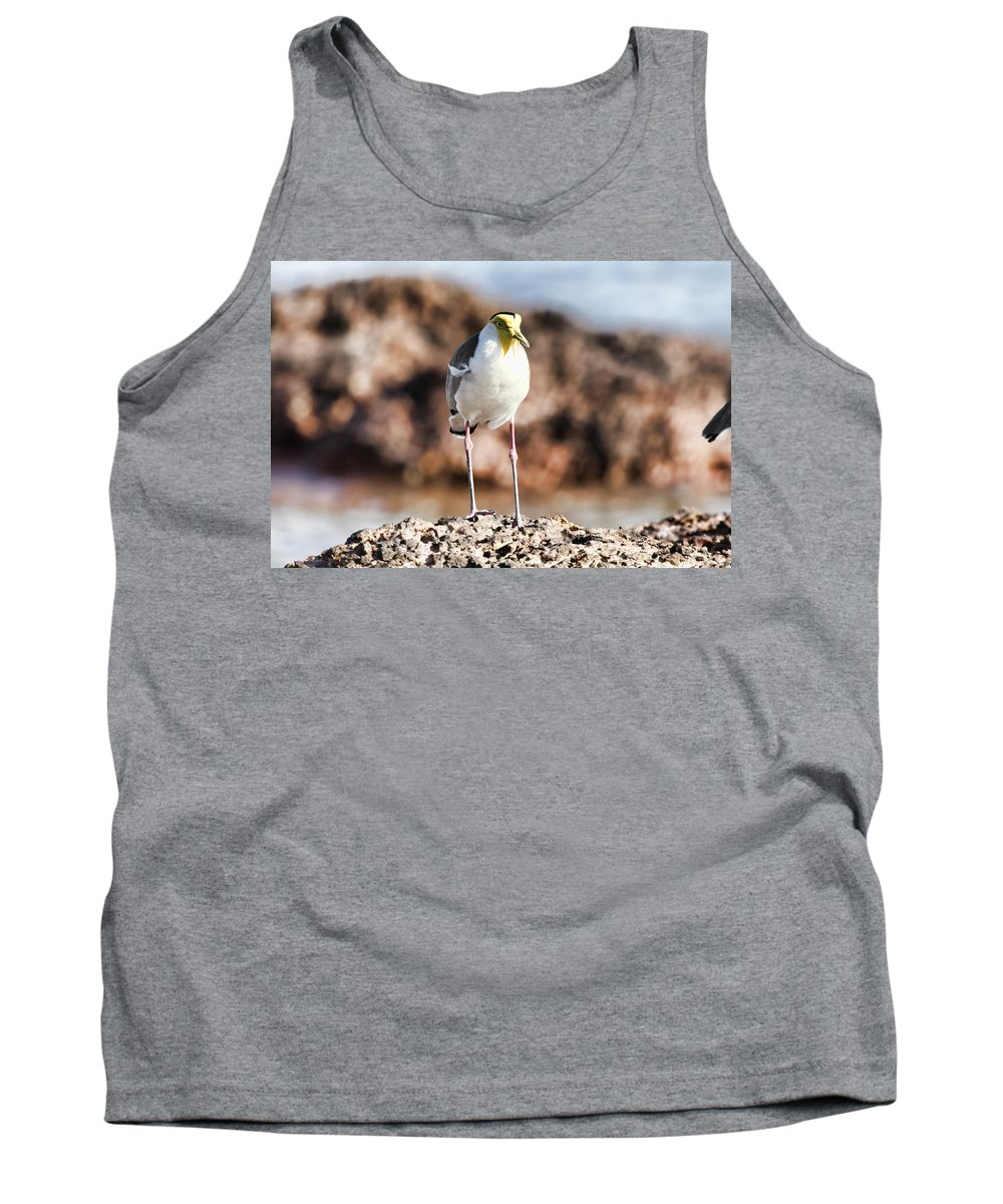 Lapwing Tank Top featuring the photograph Yellow Mask by Douglas Barnard