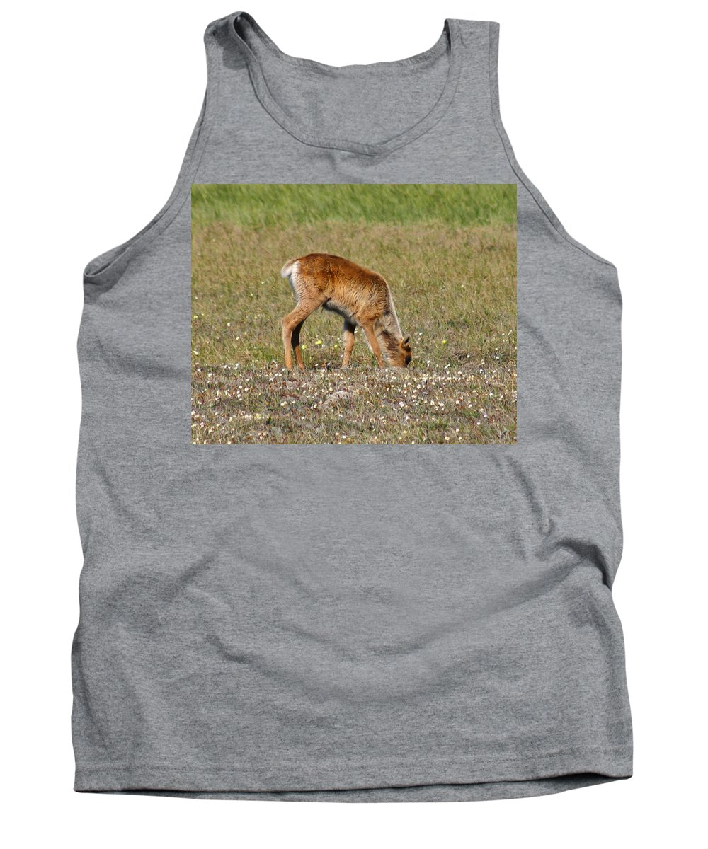 Deer Tank Top featuring the photograph Caribou Fawn by Anthony Jones