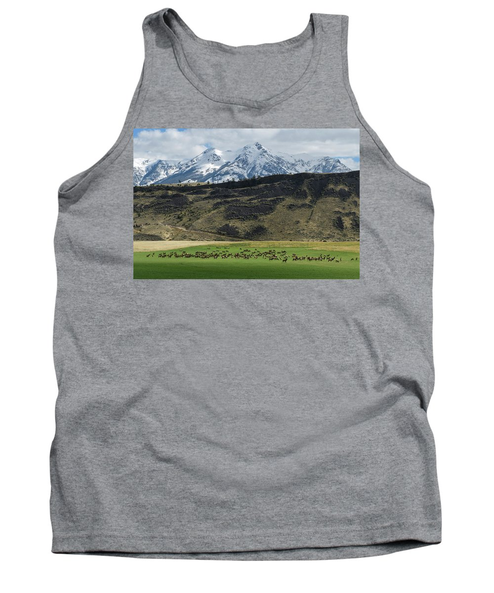 North America Tank Top featuring the photograph Elk Herd by Christian Heeb