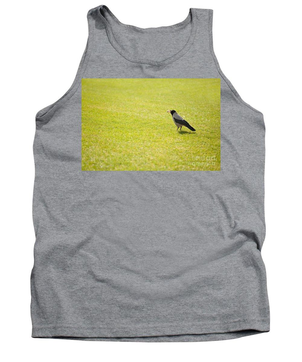 Corvus Cornix Tank Top featuring the photograph Hooded Crow Bird Gathering Hay by Arletta Cwalina