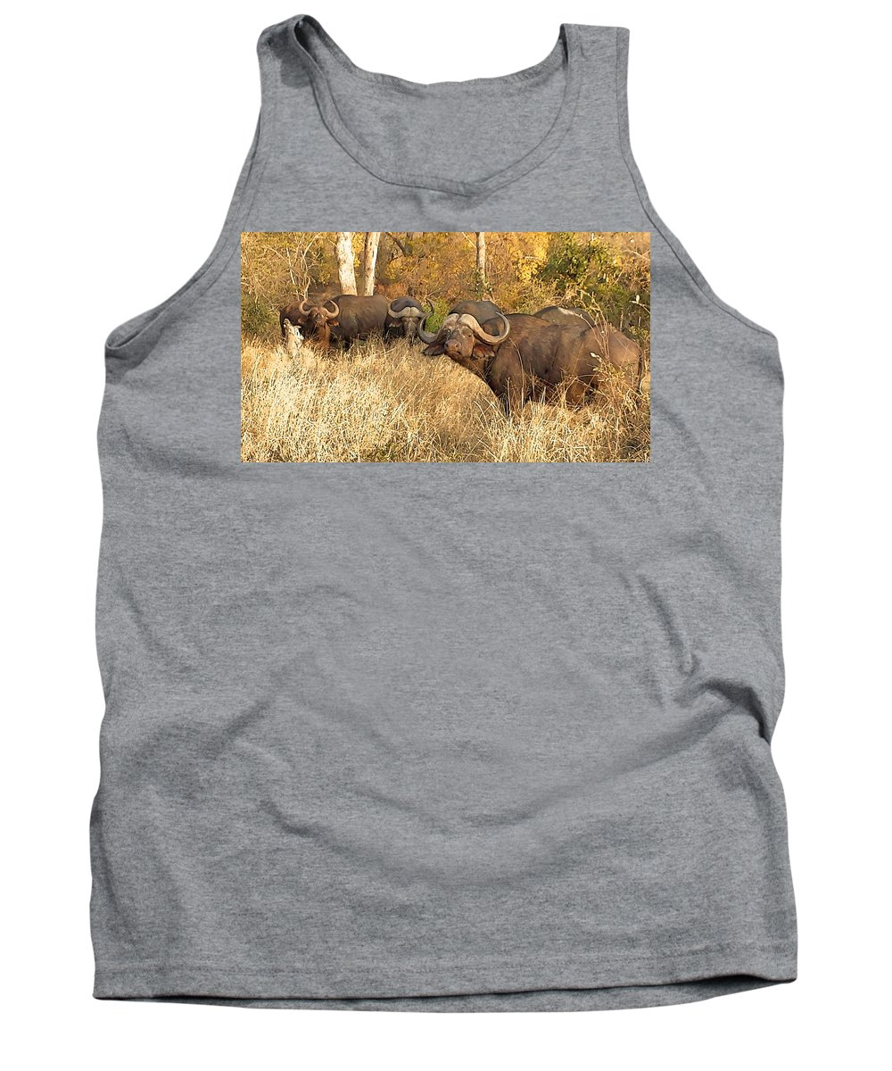 Buffalo Tank Top featuring the photograph My Friends And I by Lisa Byrne