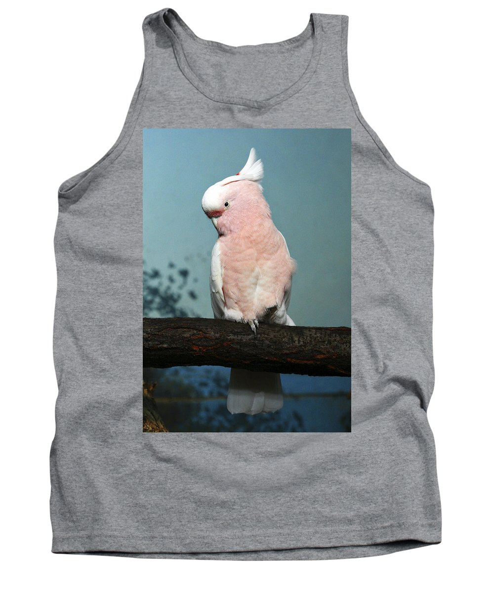 Bird Tank Top featuring the photograph Pretty In Pink by Marilyn Hunt