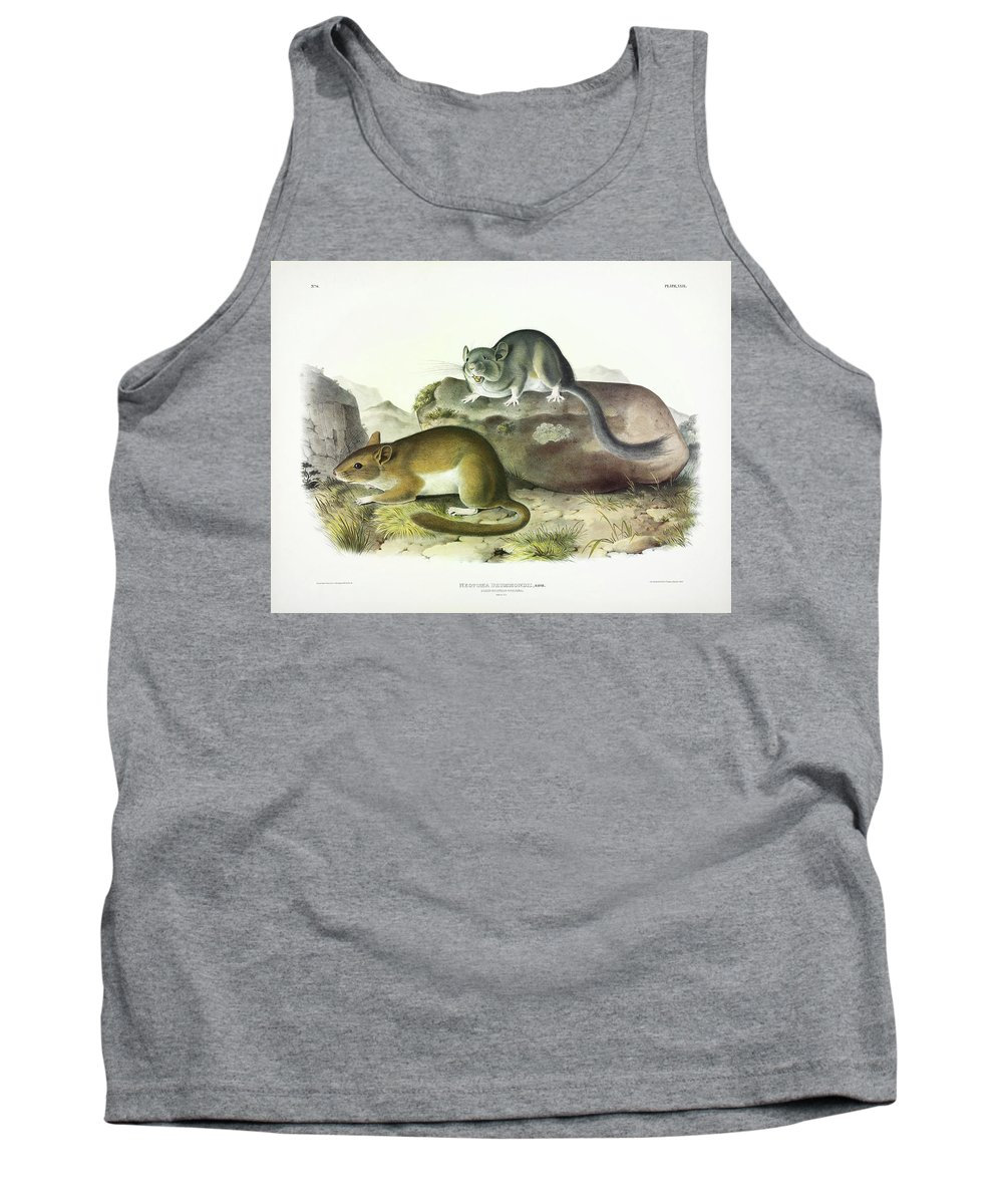 Rocky Mountain Neotoma Tank Top featuring the painting Rocky Mountain Neotoma by John James Audubon