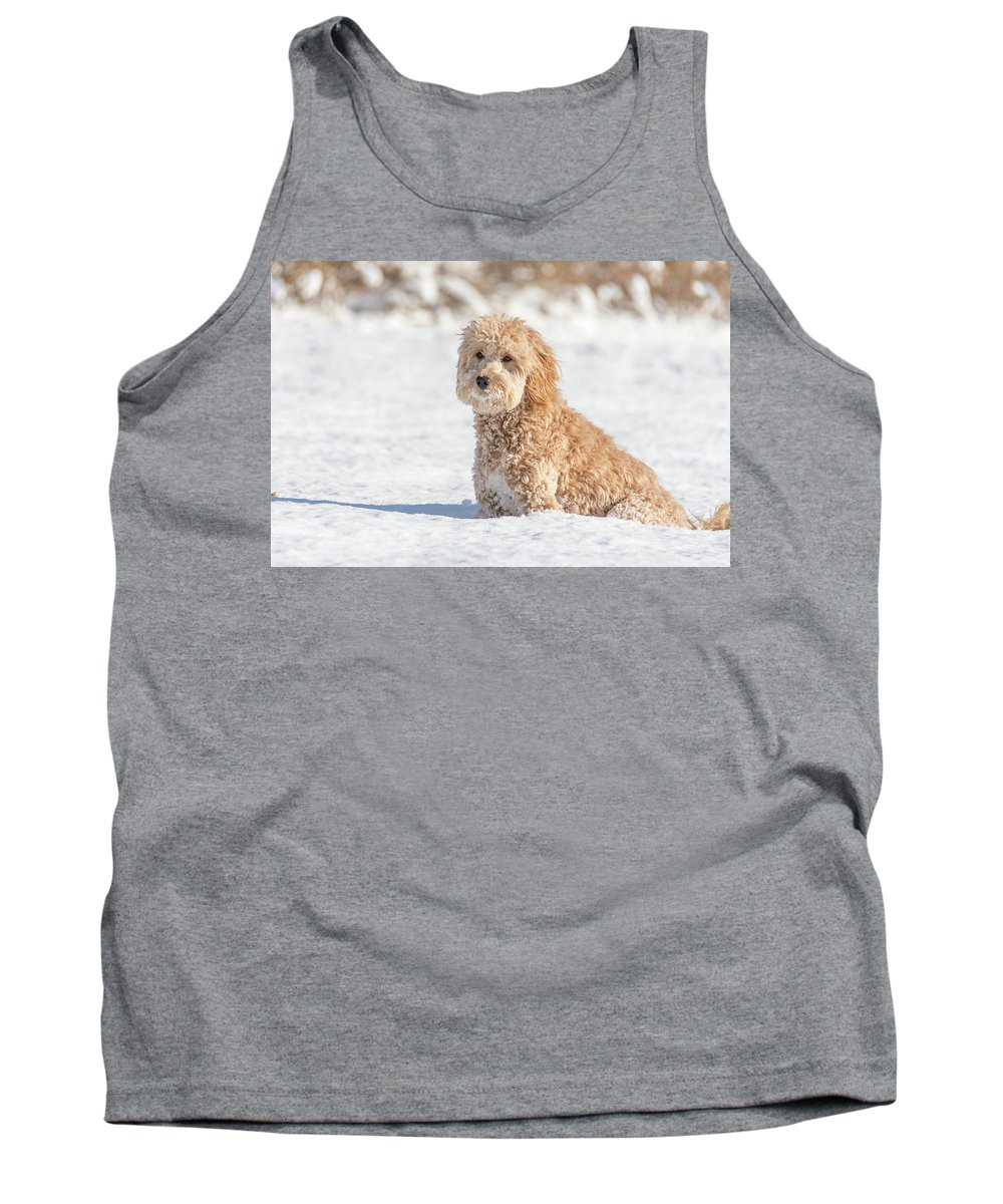 Dog Tank Top featuring the photograph Mini Golden Doodle by Marcello Sgarlato