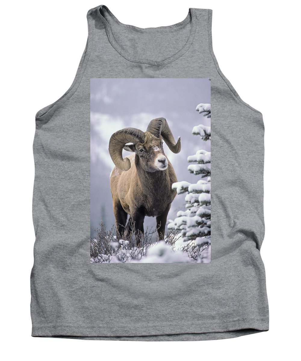 Adulthood Tank Top featuring the photograph 25084, Bighorn Sheep, Winter, Jasper by First Light