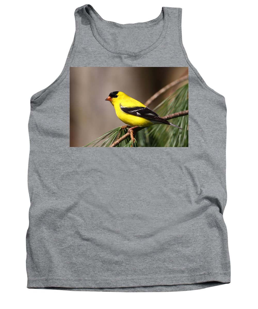 Goldfinch Tank Top featuring the photograph American Goldfinch by Bruce J Robinson