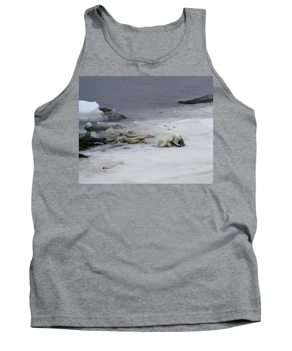 Arctic Fox Tank Top featuring the photograph Arctic Fox Eating by Anthony Jones